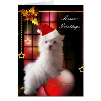 Cartão Cão de filhote de cachorro maltês branco do Natal