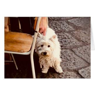 Cartão Cão de FullSizeRender 18Shy