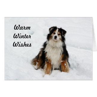 Cartão Cão de pastor australiano na neve