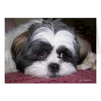 Cartão Cão de Shih Tzu