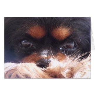 Cartão cão descuidado