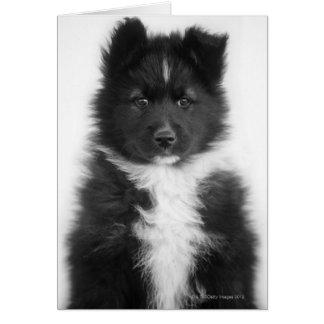 Cartão Cão do híbrido, tiro do estúdio
