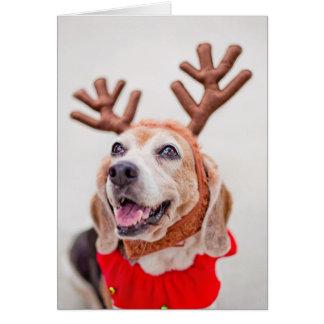 Cartão Cão do lebreiro do Natal com as orelhas festivas