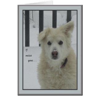 Cartão Cão *Sandy - senhorita Você de I