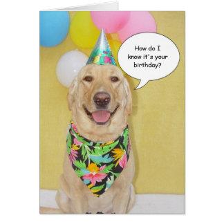Cartão Cão Sniffing do bolo