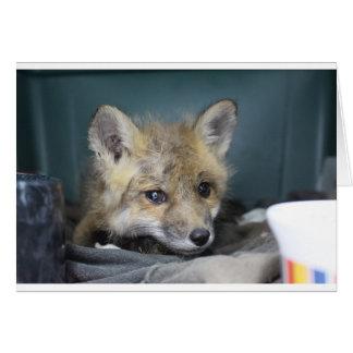 Cartão Capa de telefone do Fox