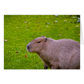 Cartão Capybara animal surpreendente