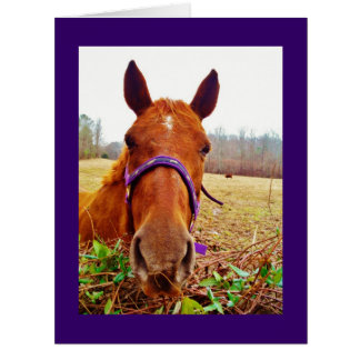Cartão Cara do cavalo de Brown do gengibre