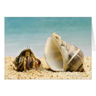 Cartão Caranguejo de eremita que olha o escudo maior