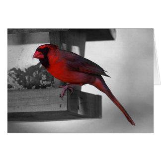 Cartão cardeal no birdhouse