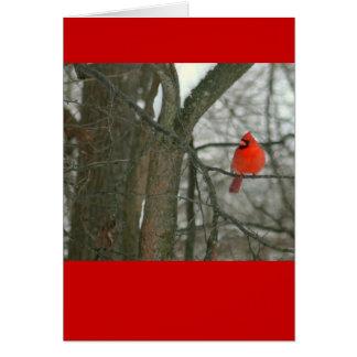 Cartão Cardeal vermelho brilhante no ramo de árvore
