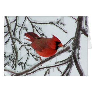 Cartão Cardinal