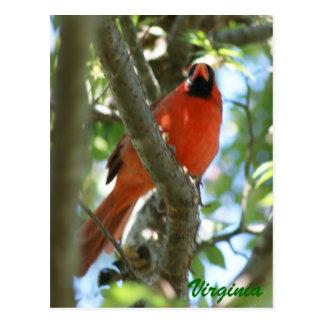 Cartão cardinal                           …