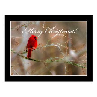 Cartão cardinal do Feliz Natal por Tom Minutolo