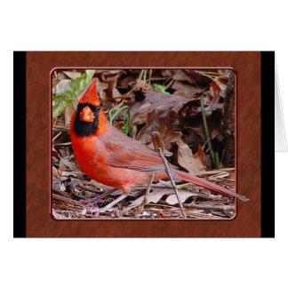 Cartão cardinal do norte