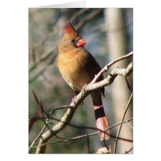 Cartão cardinal fêmea