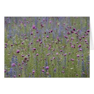 Cartão Cardo & flores selvagens da altercação roxa
