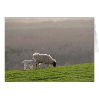 Cartão Carneiros e cordeiro da primavera em um monte