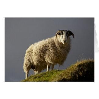 Cartão Carneiros, península de Trotternish, ilha de Skye,