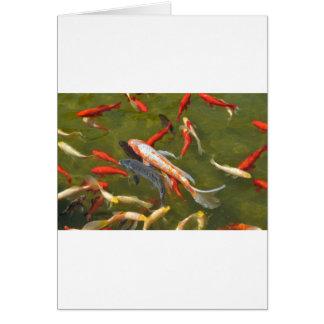 Cartão Carpas de Koi na lagoa