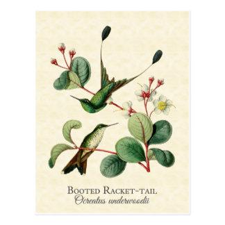 Cartão carreg da arte dos colibris da cauda da
