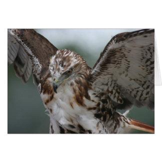 """Cartão """"Cartão da foto do pássaro do falcão vermelho da"""
