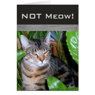 """Cartão """"Cartão de nota engraçado do gato não do Meow"""" da"""
