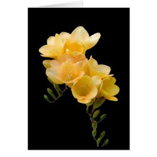 Cartão Cartão, Freesia amarelo # 1