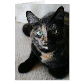 Cartão Cartão:  Gato do Mocha