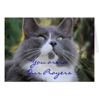 Cartão Cartão-mudança da oração do gato para alguma