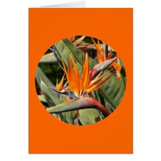 """Cartão Cartão, """"pássaro das flores do paraíso no círculo"""