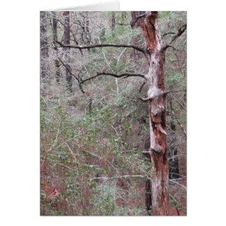 Cartão Cartão, vazio para dentro, floresta do pinho de