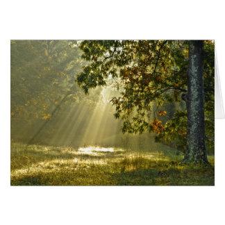 Cartão Carvalho com raios de sol da manhã