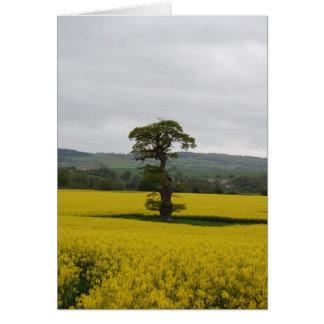 Cartão Carvalho da floresta