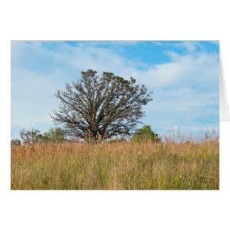 Cartão Carvalho e pradaria alta da grama