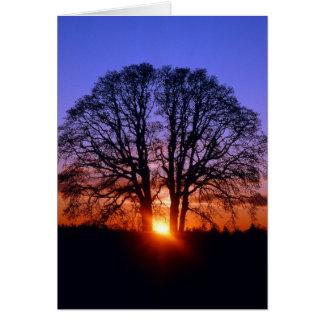Cartão Carvalho no por do sol