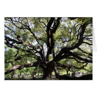 Cartão carvalho verde americano do glenwood