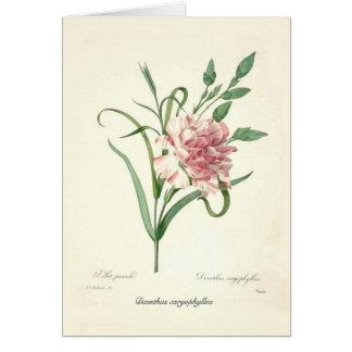 Cartão Caryophyllus do cravo-da-índia