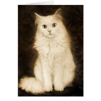 CARTÃO CAT