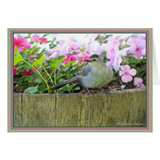 Cartão Catbird cinzento