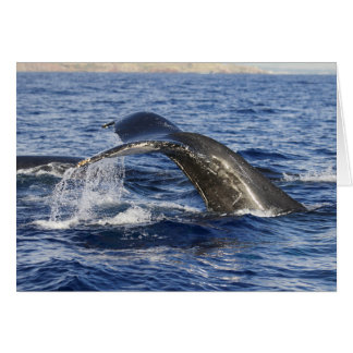 Cartão Cauda da baleia