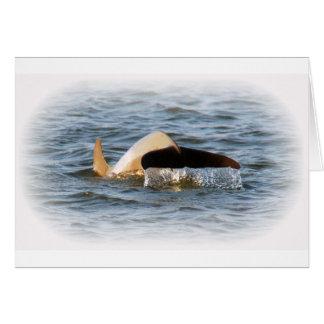 Cartão Cauda do golfinho