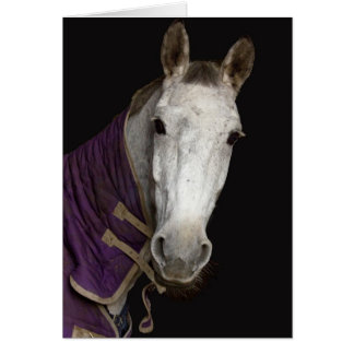 Cartão Cavalo