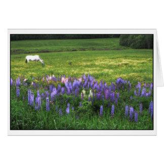 Cartão Cavalo branco no campo do Lupine