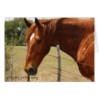 Cartão Cavalo do país do monte de Texas