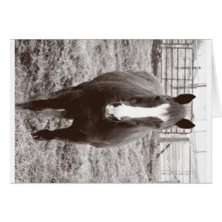 Cartão Cavalo preto e branco