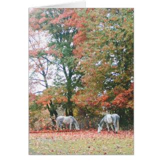 Cartão Cavalos árabes Chas & Chiaro