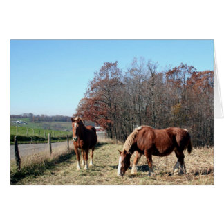Cartão Cavalos de Amish