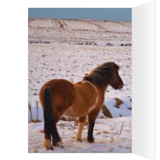 Cartão Cavalos islandêses abundante
