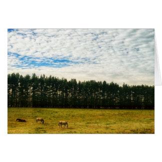 Cartão Cavalos tranquilos em um prado
